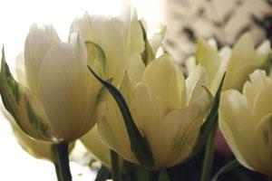 flower-farmer-blog-300w