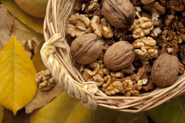 nuts-1620814_1920
