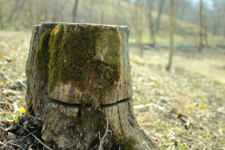 stump-879652_1920